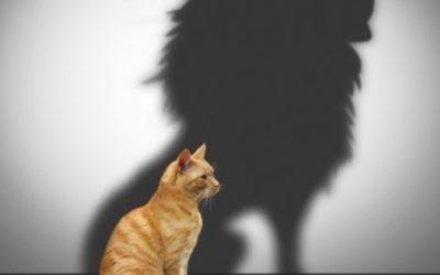 Самооценка — самоуверенность